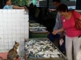 「老板,魚怎麼賣?」「不賣,自己吃的,只是拿出來曬一曬。」