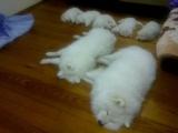 全家睡覺時間到了