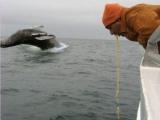 拍鯨魚不小心讓某些人搶了鏡頭