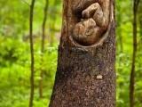 樹兒也懷孕