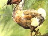 少為人知的絕種動物 (附圖)