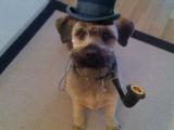 狗狗中的紳士
