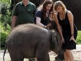 原來大象也喜歡年輕女人