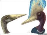 中國雌性翼龍化石帶來突破性發現