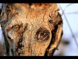 樹幹上的臉
