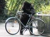 喂喂喂,你幹嘛,你又不會騎