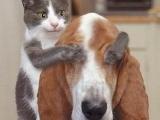 小貓跟小狗說... 你猜猜我是誰 ~