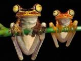 常常笑的青蛙~