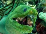 世上最恐怖的惡魔魚