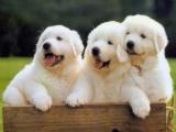 狗狗的身體語言,你又識幾多?