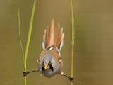 這只小鳥好強啊!Hold住了!厲害吧!