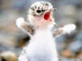 憤怒鳥影響到整個世界了!