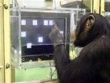 世界十種最聰明動物