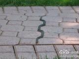 一條有強迫症的蛇