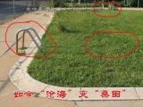 原來是游泳池,現在被填了,並種上了草!