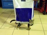 哈哈.... 超搞笑的說!手提攜貓包