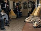 乘坐地鐵的不一定是人