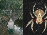 馬達加斯加發現世界上最大最堅實蜘蛛網