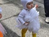 我是小公雞