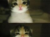 當你看過這小貓, 一定會說的話...