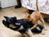 這隻貓也太恐怖了吧!