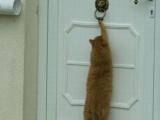 進門前要先敲門才有禮貌喔