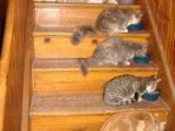 家裏養的貓咪真的很懂事