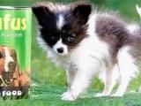 九種世界上最小的動物