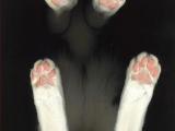這是誰的手手跟腳腳◕ ‿‿ ◕?