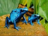 [轉帖] 全球十大最稀罕奇特青蛙 鮮豔毒蛙能殺死10個大男人