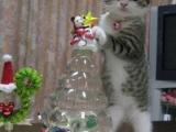 喵:主人~聖誕節過去了,偶可以要這隻米老鼠嗎??