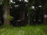 森林中的光圈