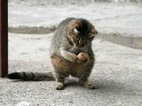 在路上見到一隻屬鬆鼠的貓.....