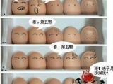 雞蛋們的幽默~ XD