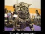 貓咪很跩的眼神