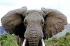 大象和小鳥的區別