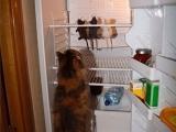 我家冰箱裡的食物