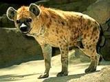 十大性開放的動物