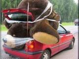買了一隻大熊,還真難帶回家!