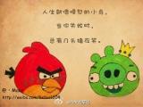 人生就像憤怒的小鳥,當你失敗時總有幾頭豬在笑