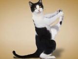 向瑜伽貓狗請教
