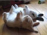 兩隻兔子在睡覺