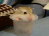 超可愛的小老鼠