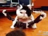 我是體操高手