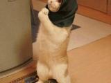 賣火柴的小貓